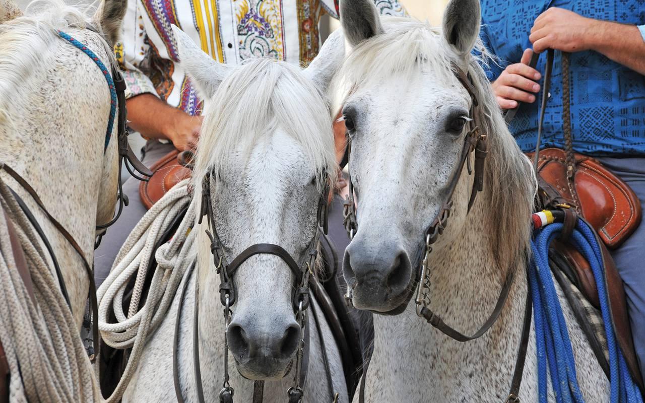 White horses spa hotel camargue